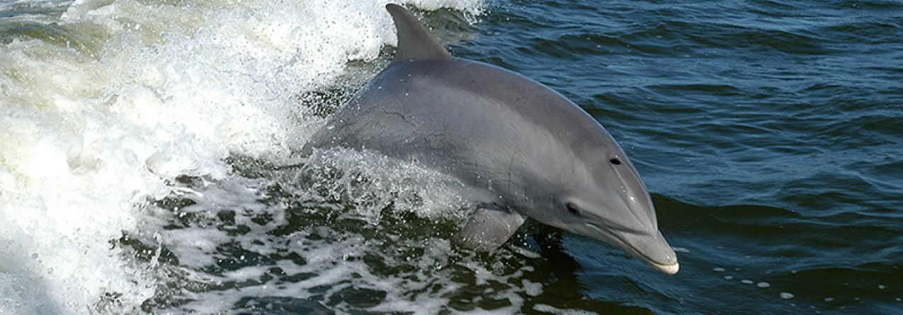 Poluição contamina golfinhos e lança alerta sobre níveis de mercúrio