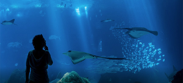 Oceanário de Lisboa distinguido como o melhor aquário do mundo