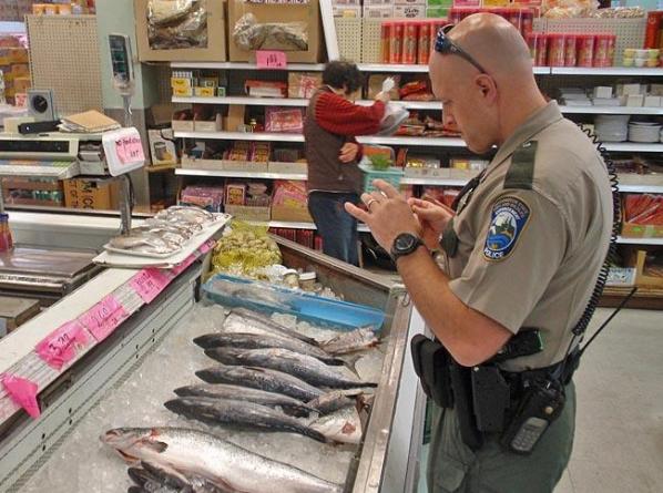 Pesca com 20% de fraudes em todo o mundo