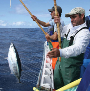 Governo dos Açores defende em Bruxelas quota do goraz e pesca de atum com salto e vara