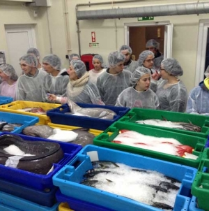 Capturas de pescado nos Açores continuam a afundar-se
