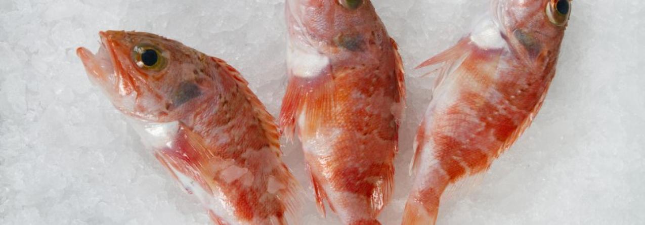 Pesca descarregada na lota da Graciosa subiu em julho