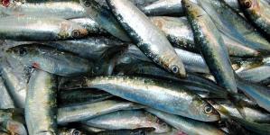 60% do peixe pescado em Portugal é sardinha, cavala e carapau