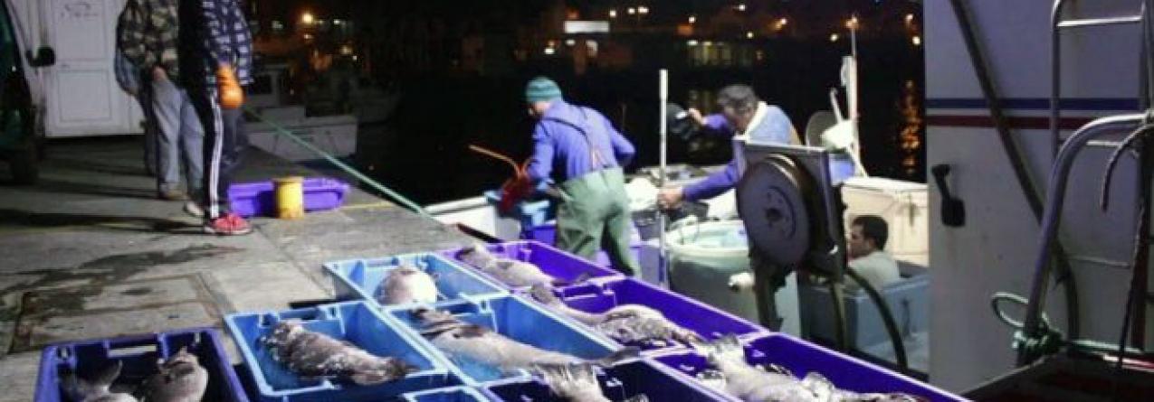 """Pesca descarregada nos Açores volta a """"afundar"""" em Setembro"""