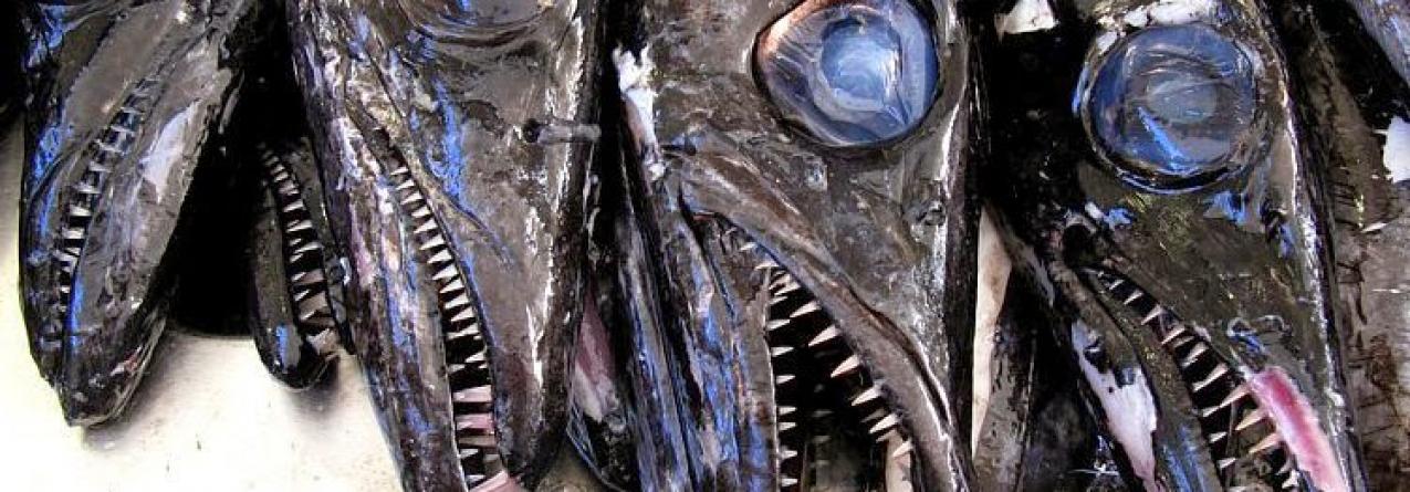 Bruxelas propõe cortes nas pescas de águas profundas até 20% (peixe-espada preto, goraz e abrótea)