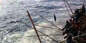 """Presidente da Federação das Pescas deixa alerta sobre descargas de atum que registaram quebras """"abruptas"""" nos últimos cinco anos nos Açores"""