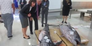 Embaixador dos Estados Unidos da América visita lota de Ponta Delgada
