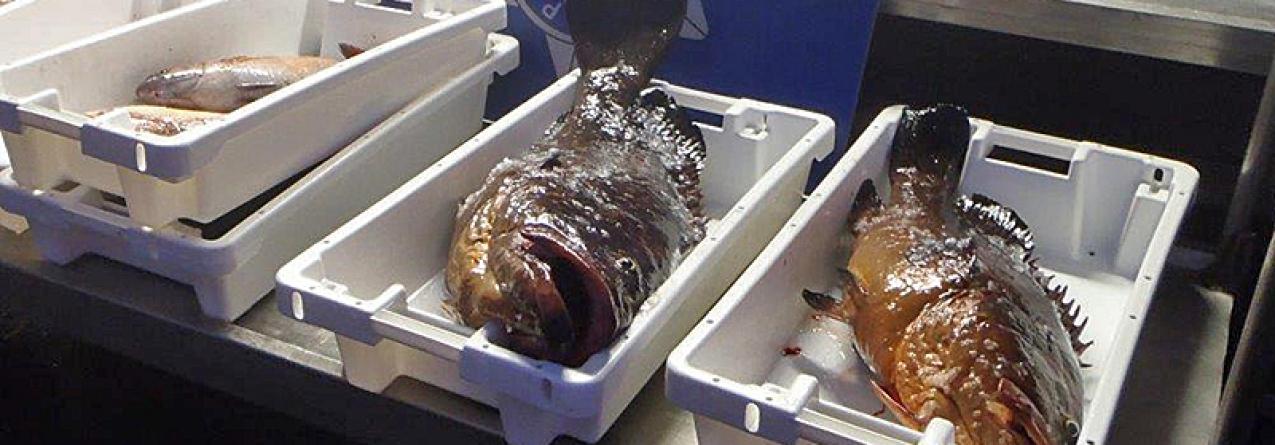Polícia Marítima identifica embarcação a pescar ilegalmente a norte da ilha de Santa Maria