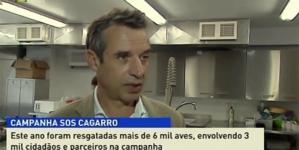 Mais cagarros salvos este ano nos Açores (vídeo)