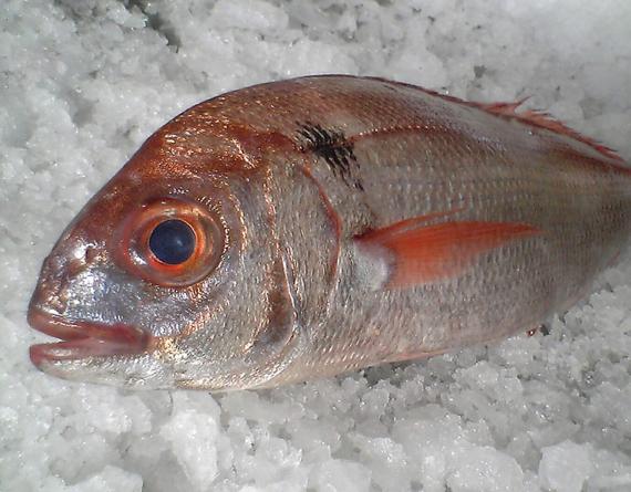 Pescadores de goraz já só podem pescar 68 toneladas para atingir o limite da quota atribuída aos Açores