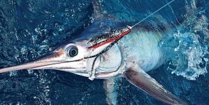 Espadarte do Mediterrâneo protegido por quotas de pesca a partir de 2017