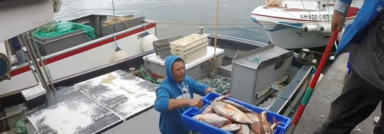 Como a quota de pesca do goraz nos mares dos Açores caiu de 1.116 para 507 toneladas em 4 anos
