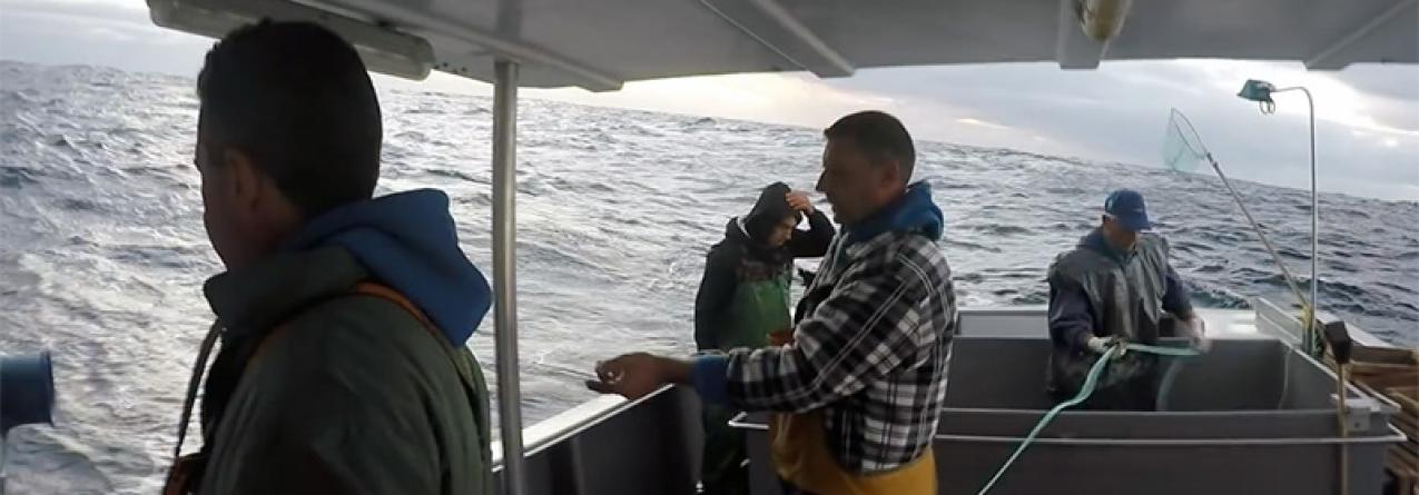 Açores // Goraz // Atingidos os 70 por cento da quota a captura pode ser supensa