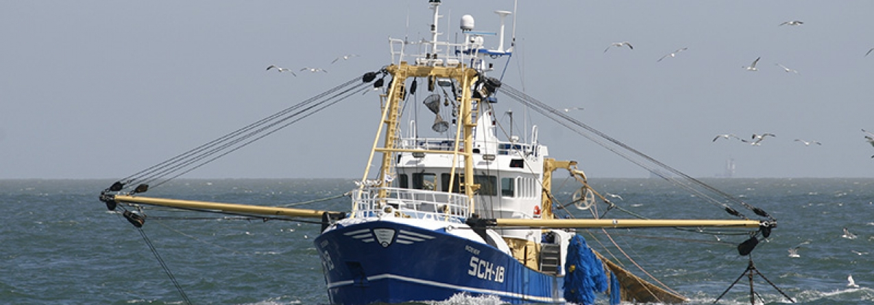 Eurodeputados aprovam proibição de pesca de profundidade