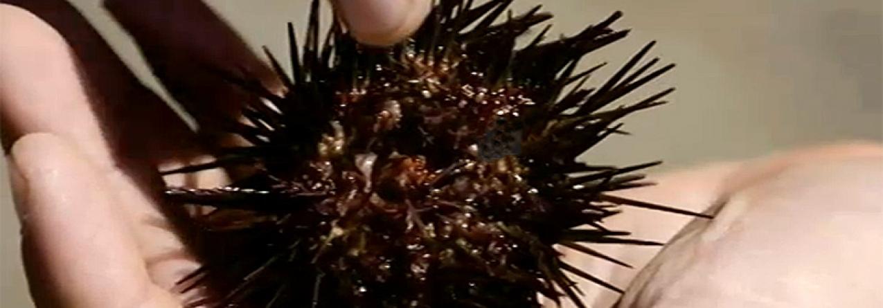 Bombordo (II) O Fabuloso Mar de Ouriços | Episódio 1 (vídeo)