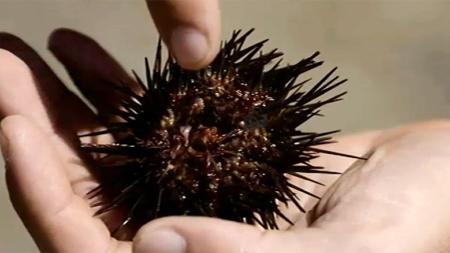 Bombordo (II) O Fabuloso Mar de Ouriços   Episódio 1 (vídeo)