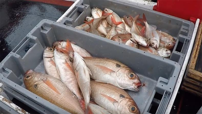 Pesca do goraz interdita na Graciosa até 31 de dezembro