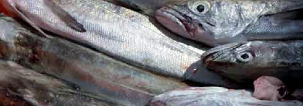 Maratona negocial nas pescas termina com 5% de cortes nas capturas de pescada