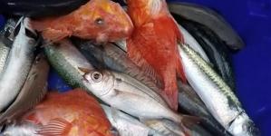 Inspeção das Pescas dos Açores instaurou 82 contraordenações em 2016