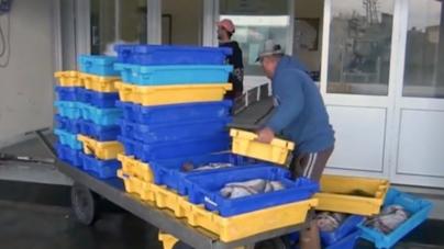 800 quilos de chicharro apreendidos em Rabo de Peixe // Esclarecimento do Governo dos Açores