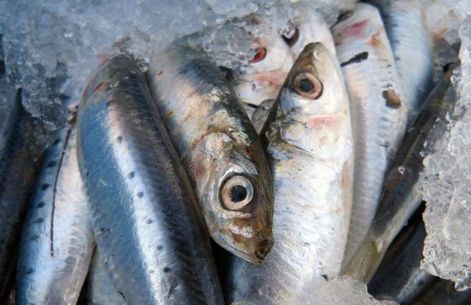 Cresce a procura de peixe português nos mercados internacionais