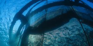 Governo dos Açores promove workshop sobre investigação e inovação responsáveis na pesca e aquacultura