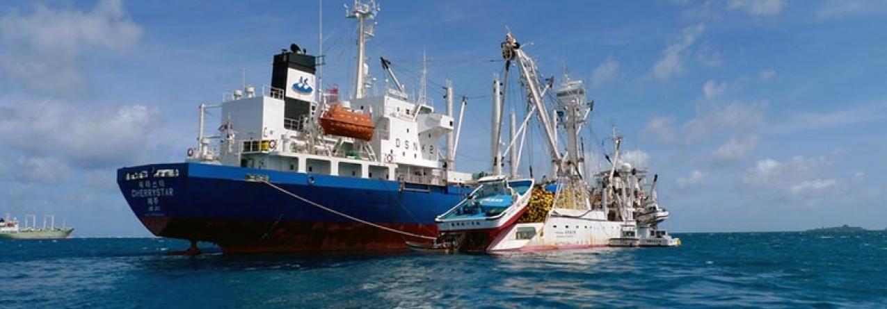 """Governo dos Açores defende """"corredor marítimo"""" para a pesca do atum"""