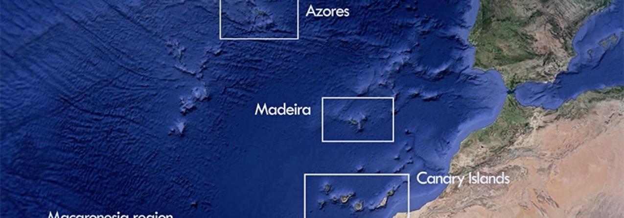 Governo dos Açores lidera plano de ação para implementação da Diretiva-Quadro Estratégia Marinha na Macaronésia