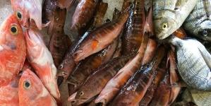 As margens de comercialização que levam os açorianos a serem os portugueses que menos consomem peixe em todo o país