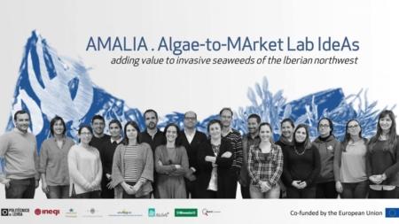 Projeto europeu liderado pelo Politécnico de Leiria (MARE-IPLeiria) vai transformar uma atual ameaça dos oceanos, as algas invasoras, numa oportunidade