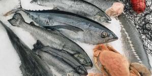 Consumo de pescado na União Europeia em alta