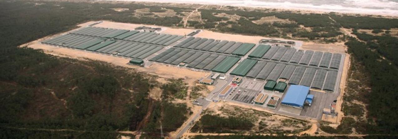 Maior empresa de aquicultura no país negoceia futuro com a banca