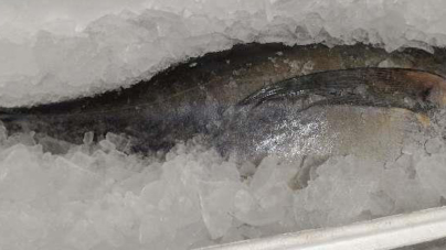 Açores exportaram em 2016 menos 545,3 toneladas de pescado do que em 2015