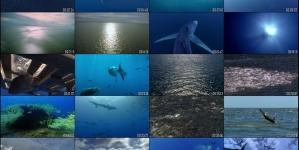 Açores são 'hotspot' para filmagens em oceano aberto e profundo, afirma Diretor Regional dos Assuntos do Mar