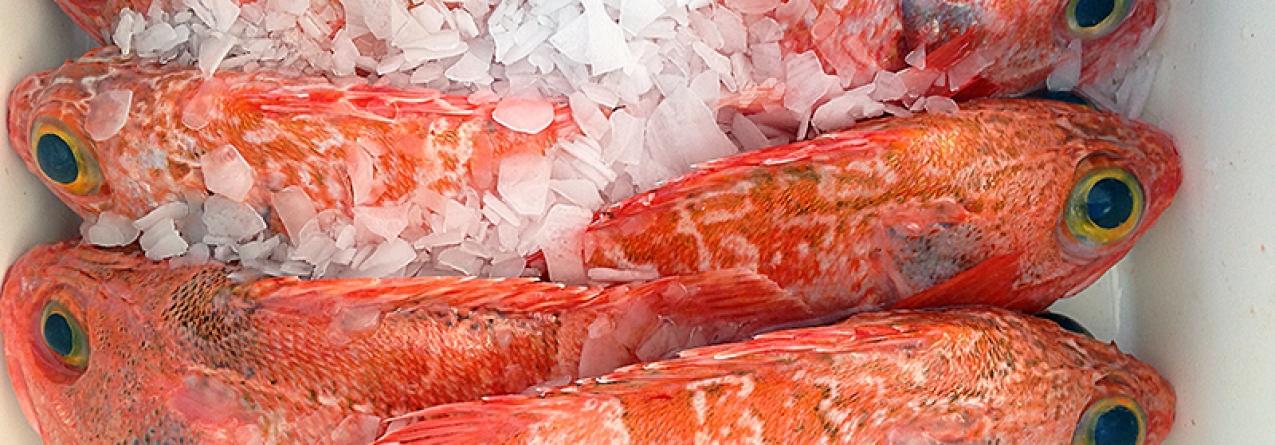 Açores // Exportações para o estrangeiro caem 19% com quebras no peixe fresco e conservas