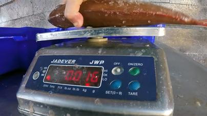 GNR apreende 200 quilos de goraz na Terceira, com valor estimado de 1.500 euros
