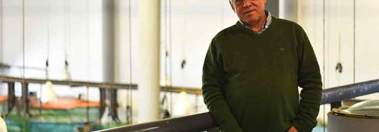 Sardinha de aquacultura será mais-valia para a indústria conserveira