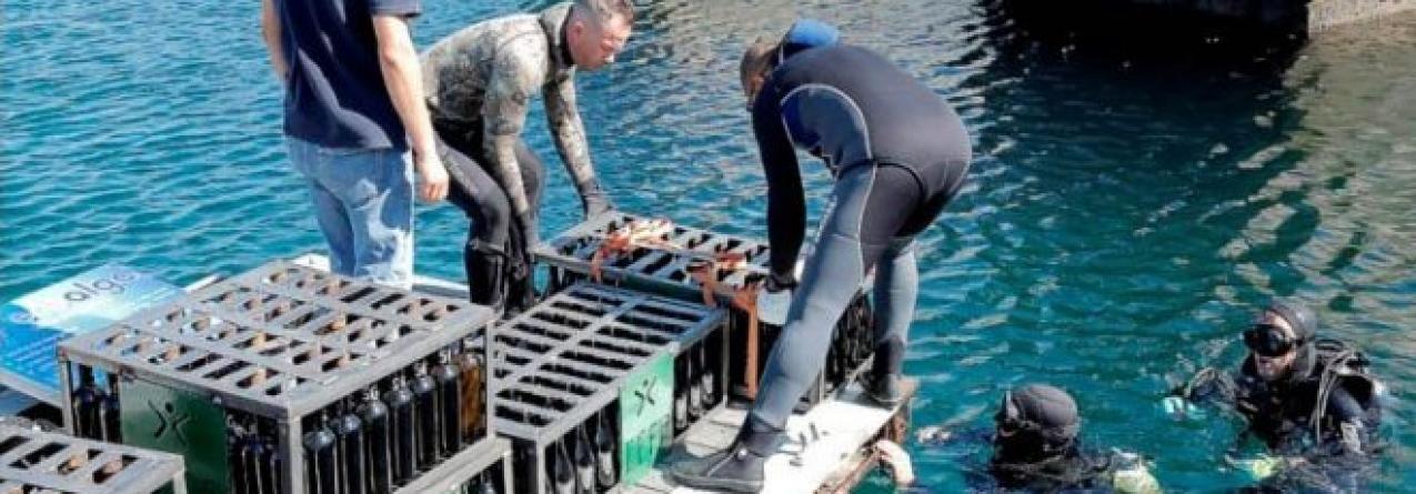 Vinho em maturação é retirado do fundo do mar no Porto de Recreio de Sines