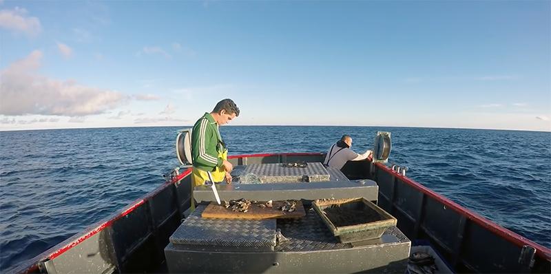 PS/Açores destaca importância da valorização de produtos na pesca e agricultura