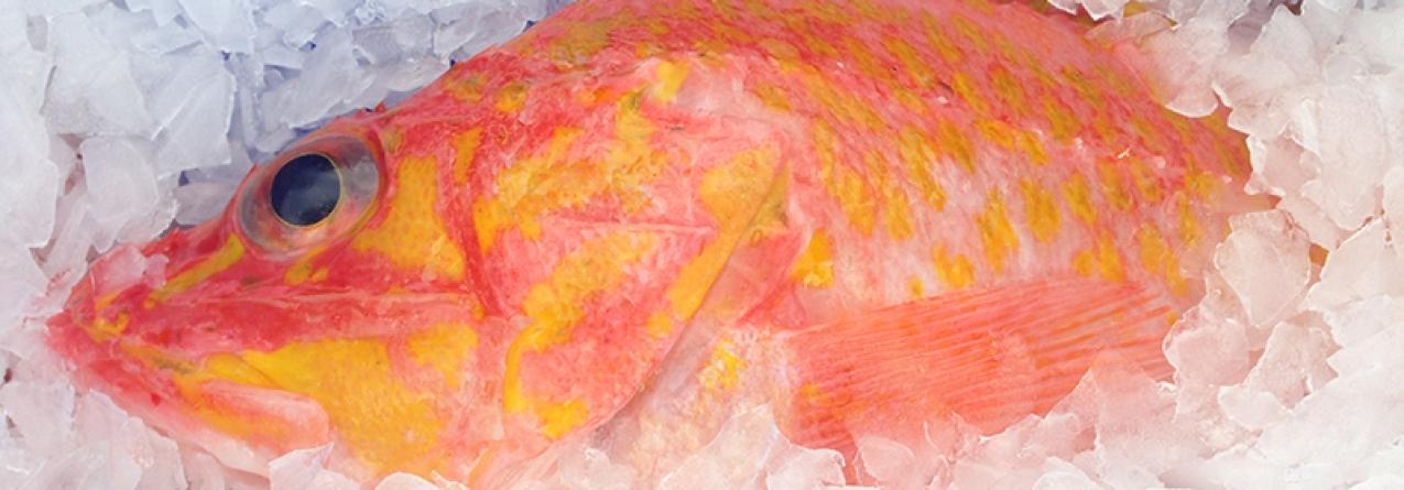 170 gramas por dia. Portugueses são os maiores consumidores europeus de peixe