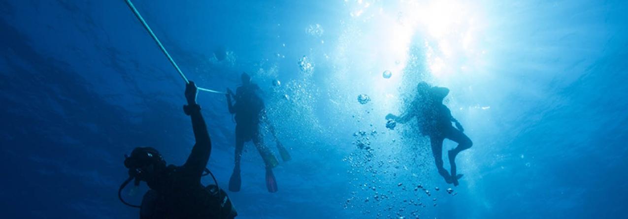 Campanha 'Açores Entre Mares 2017' recorre à arte para sensibilizar para a proteção dos oceanos