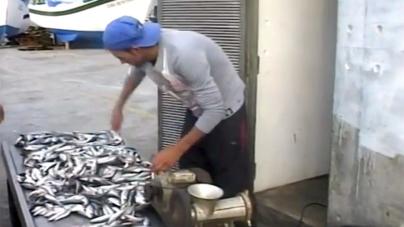 """São Miguel // Pescadores de chicharro dizem que """"estão a viver numa situação de desgraça"""""""
