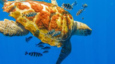 Parcerias entre arquipélagos macaronésicos são fundamentais para políticas ambientais marinhas, afirma Diretor Regional dos Assuntos do Mar