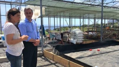 Produção de algas em aquacultura é uma realidade nos Açores
