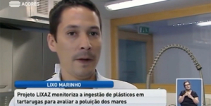 Departamento de Oceanografia e Pescas estuda quantidade de plásticos que as tartarugas ingerem (vídeo)