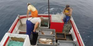 Açores // Paragem biológica na pesca causaria prejuízo de 5 milhões, diz governante