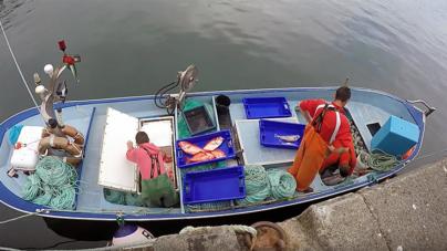 Pesca descarregada nos Açores cai a pique, com destaque para São Miguel