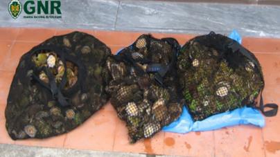 GNR apreendeu 32 kg de lapas na ilha do Pico
