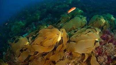 Conferência da ONU sobre Oceanos // Portugal compromete-se a duplicar áreas marinhas protegidas até 2020