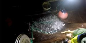 São Miguel // Pescadores indignados com declarações do Secretário do Mar apresentam rendimentos à Assembleia Legislativa Regional